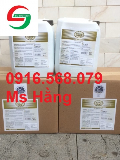 Cung cấp Yucca Mexico 100%-BAJA AGRO INTERNATIONAL – Mexico