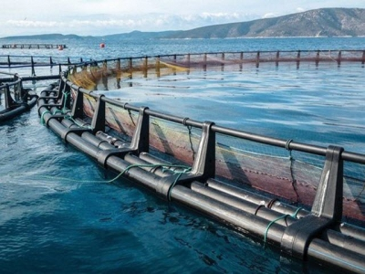 Risk management for the aquaculture industry