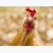 US poultry producers regain market access to China