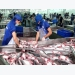 Tra fish exports to Japan skyrocket in four months