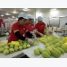 US increases Vietnamese fruit imports