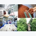 Make use of each market for export of agricultural products