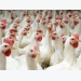 New poultry learning center showcases animal care